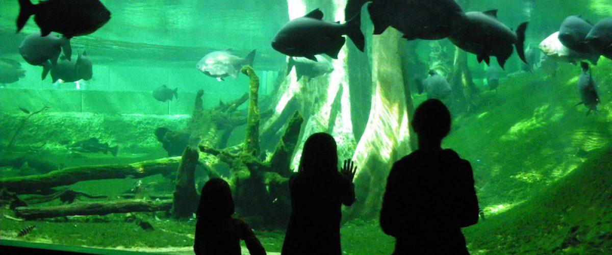 Barcelona con niños: 3 museos que no te puedes perder