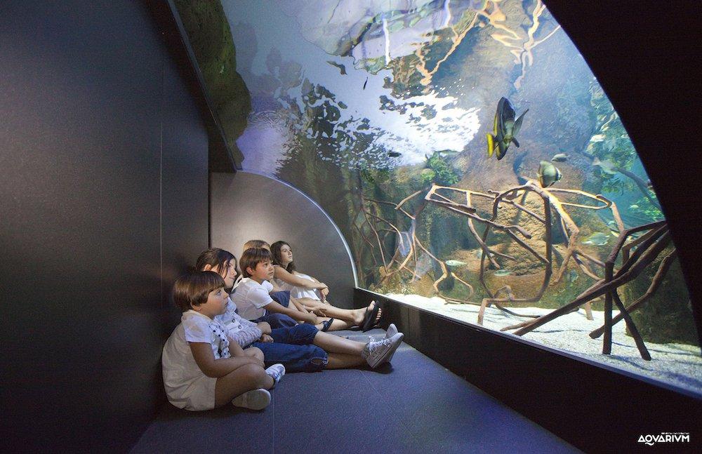 Aquarium de san sebasti n descubre los secretos del mar - Aquarium donosti precio ...