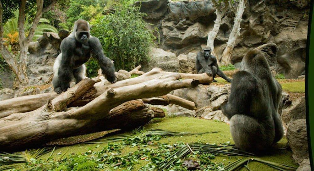 Vacaciones en familia en Tenerife, los zoológicos