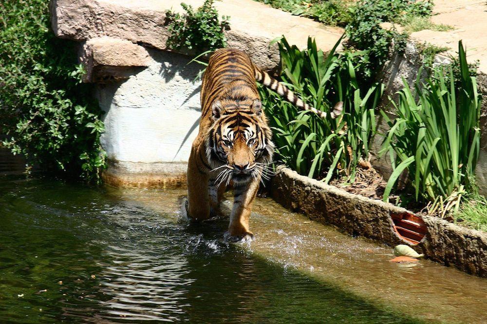Zoo de barcelona una excursi n con ni os especial for Zoo exterieur