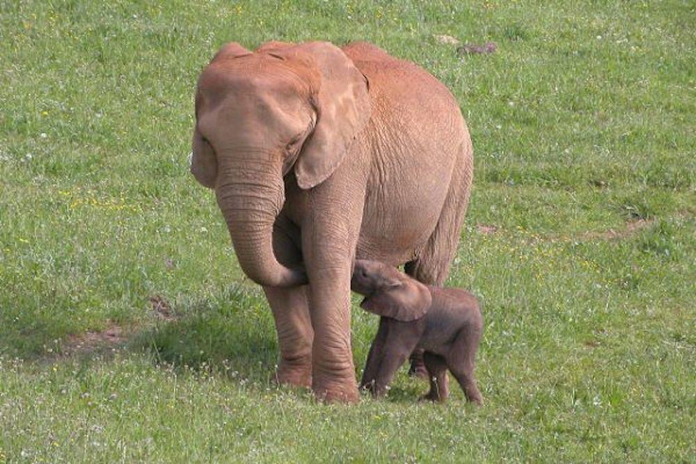 Planes con niños para ver animales en semilibertad