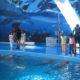 Zoo Barcelona. Horarios, entradas e info sobre el Zoo de Barcelona
