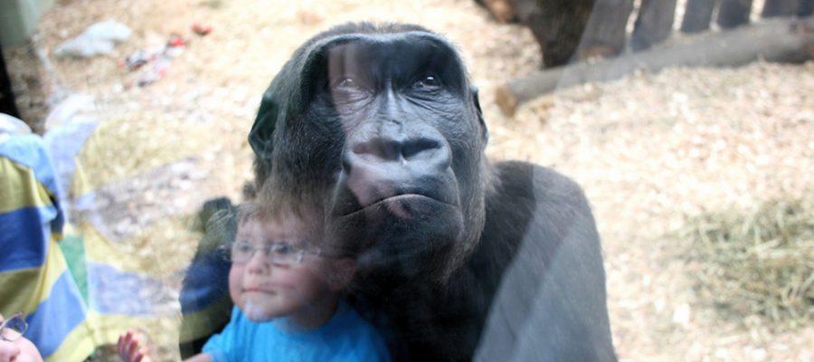 Londres con niños, ¡descubre el London Zoo!