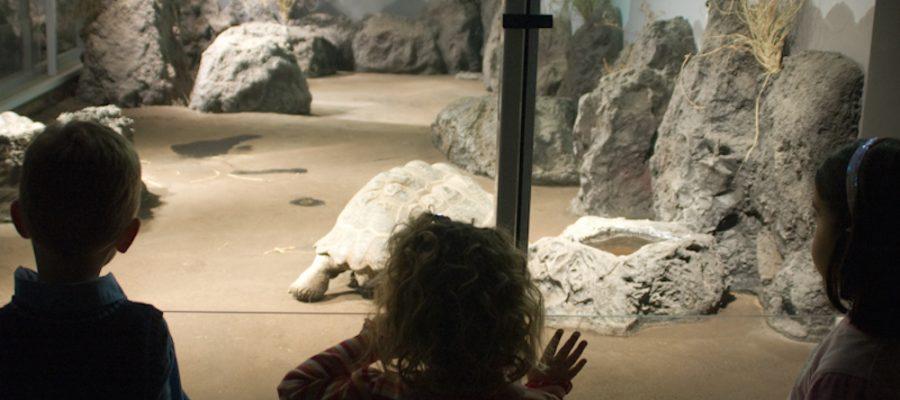 Nueva York con niños: Museo Americano de Historia Natural