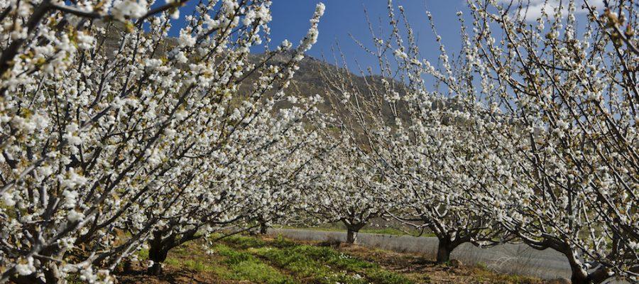 Escapadas con niños: Cerezo en Flor del Valle de Jerte