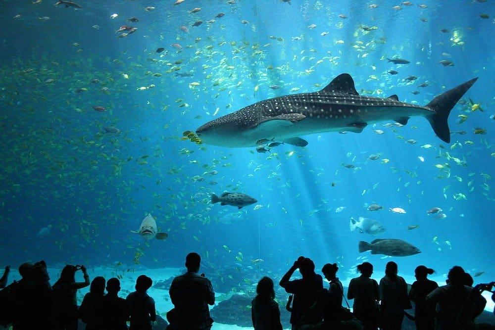 Aquarium espectaculares