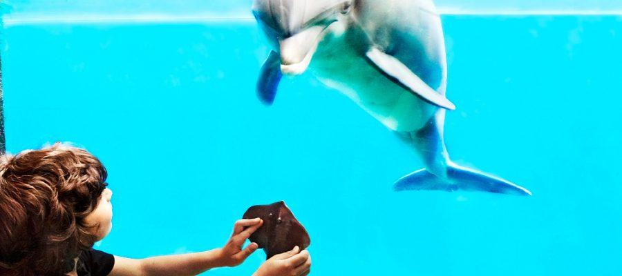 Los 10 aquarium más espectaculares del mundo