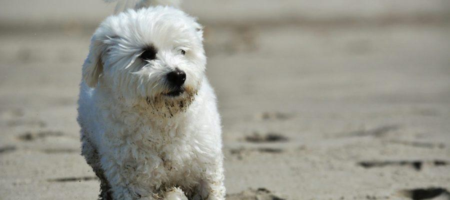 13 playas para perros en España