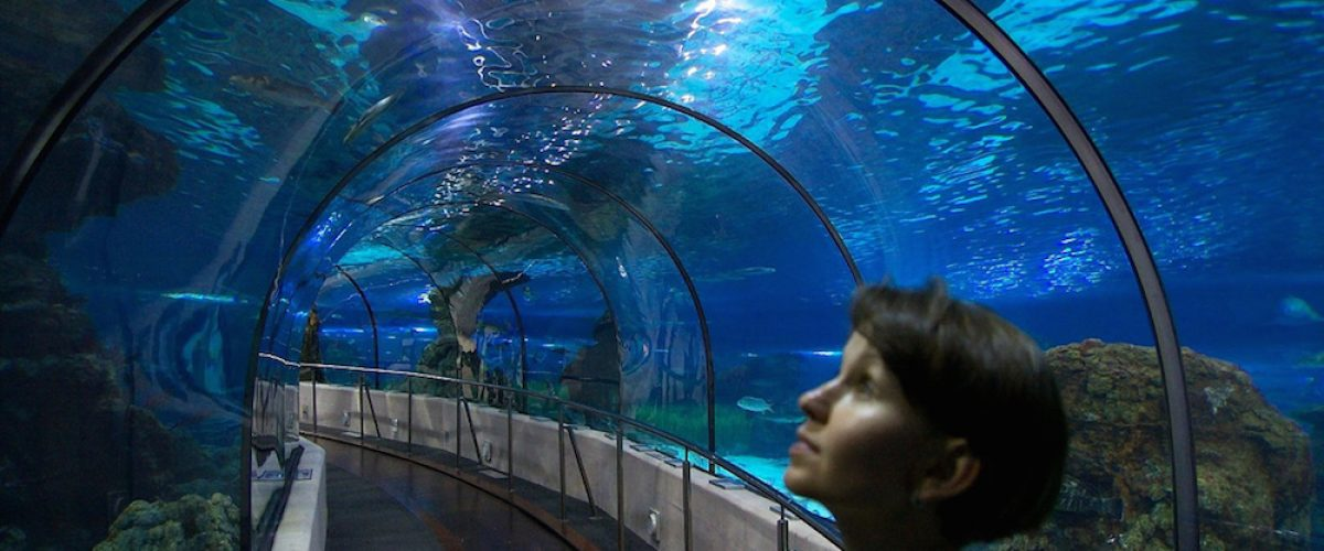 Aquarium de barcelona conoce los secretos del mar for Aquarium de barcelona