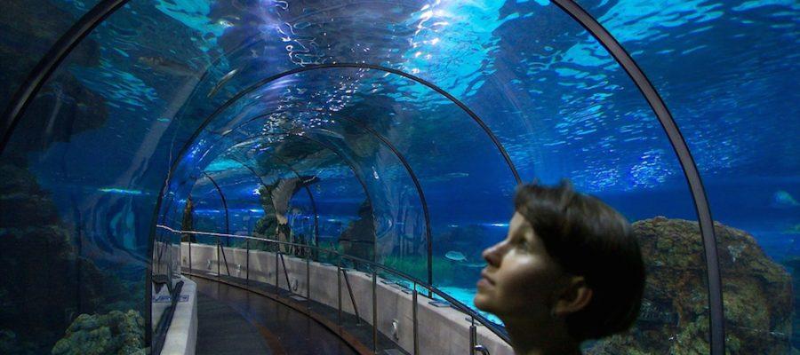 Aquarium de Barcelona, ¡conoce los secretos del mar!