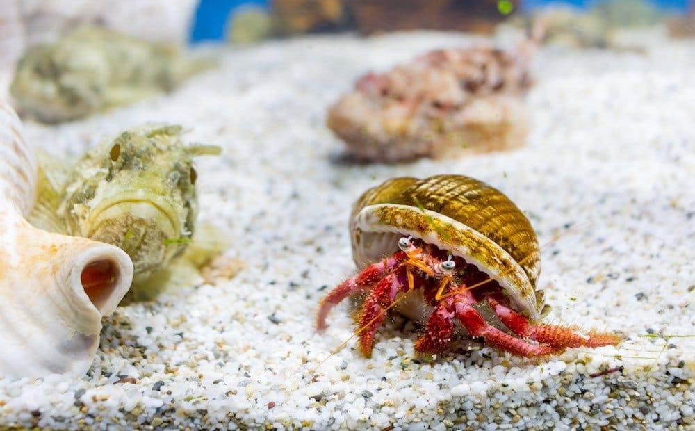 Aquaworld Aquarium & Reptile Rescue Centre (Creta, Grecia)