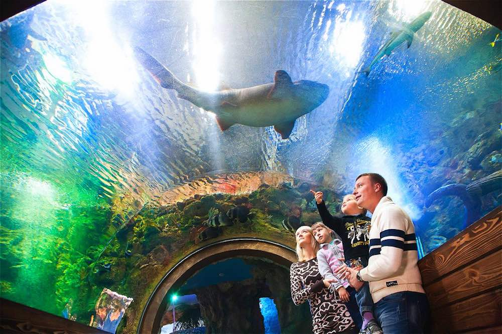 Voronezh Oceanarium Voronezh, Rusia