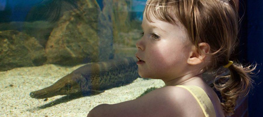 Los 10 mejores acuarios de Europa