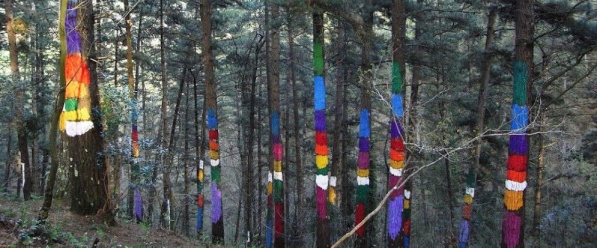Planes con niños, 5 bosques encantados