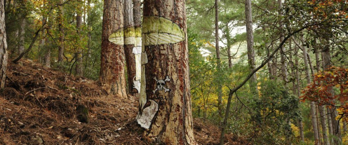 Senderismo con niños en el Bosque pintado de Poblet