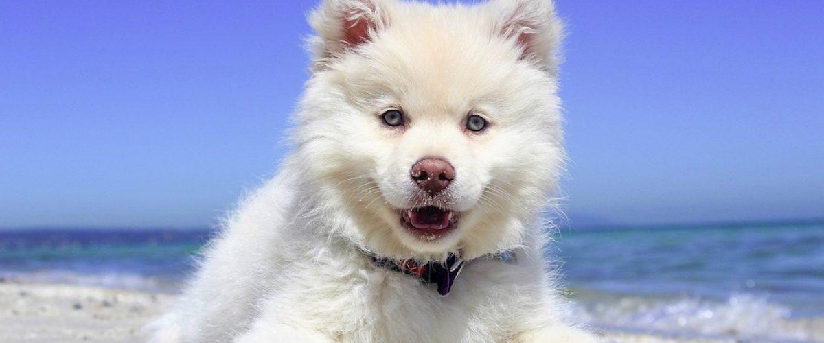 ¿Viajas con tu mascota? 5 cosas que te vendrá bien saber