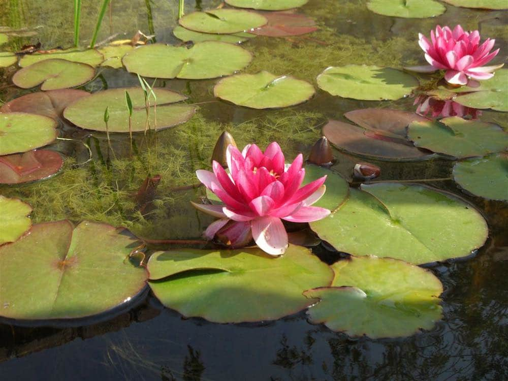 Montjuic 10 cosas para hacer con los ni os en montjuic for Jardin botanico montjuic