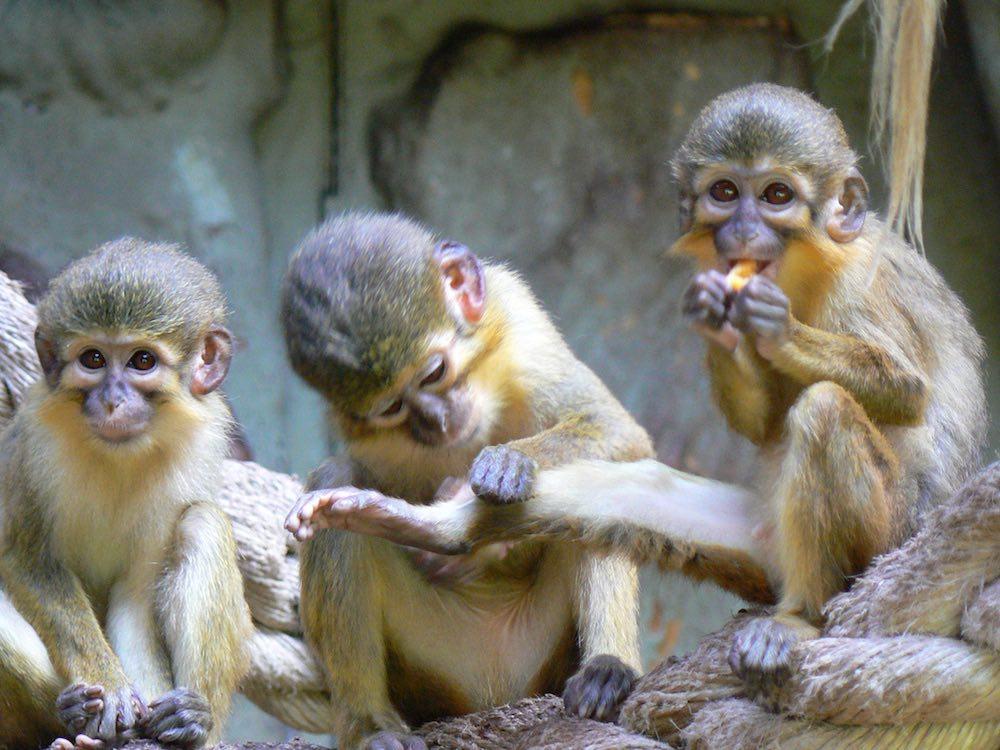 Zoo Barcelona animales