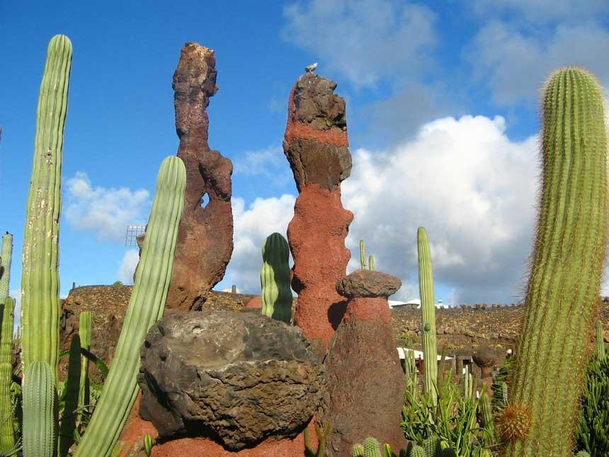 lanzarote jardin de cactus