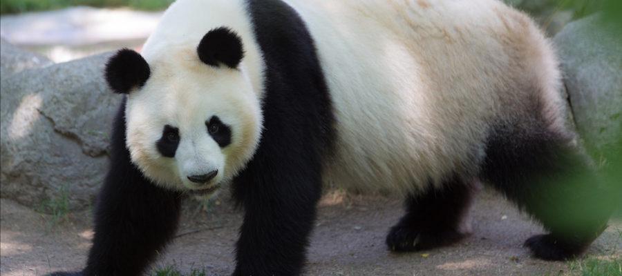 Zoo de Madrid, lo que tienes que saber antes de ir