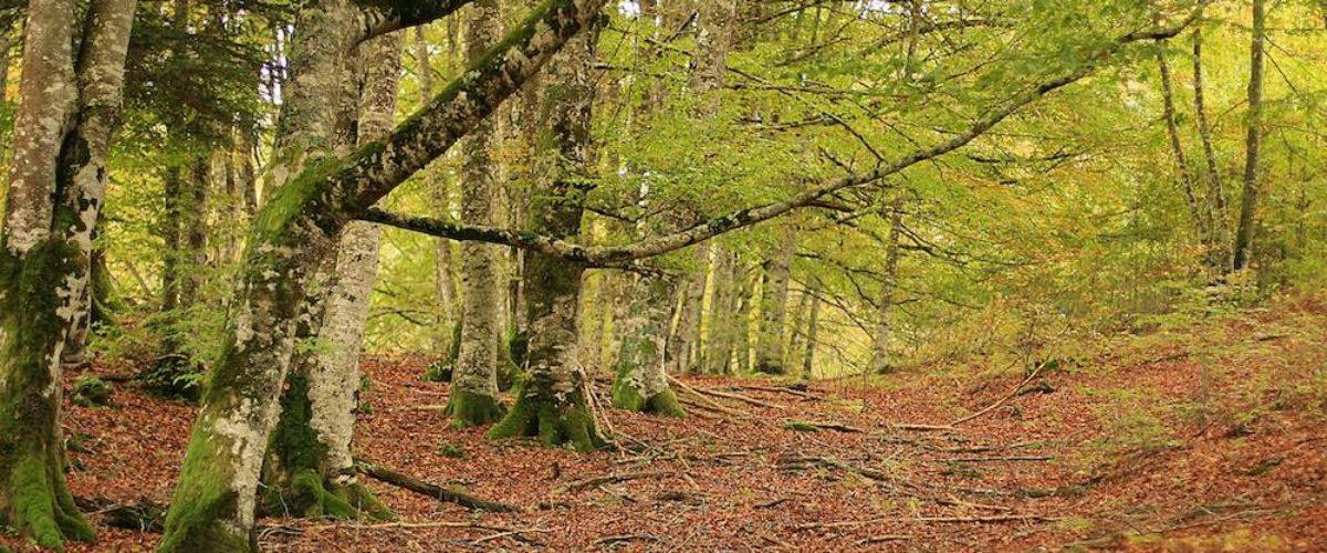 Selva de Irati: qué saber antes de ir