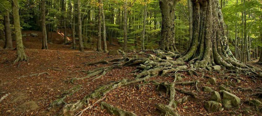 Parque Natural del Montseny, ¡un bosque mágico!