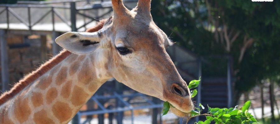 Selwo Aventura, parque de animales en Estepona
