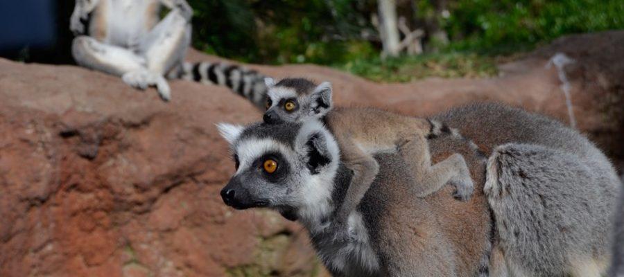 Bioparc Fuengirola. Parque de animales en la Costa del Sol
